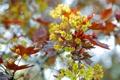Картинка листья, цветы, природа, дерево, лепестки