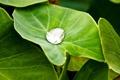 Картинка зелень, вода, лист, зеленый, роса, капля, капля воды