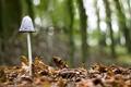 Картинка листья, макро, природа, гриб