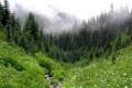 Картинка лес, горы, туман