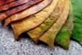 Картинка макро, листва, светофор
