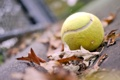 Картинка осень, листья, настроение, мяч, tennis, ball, теннисный мяч