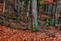 Картинка осень, листья, деревья, забор