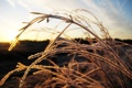 Картинка иней, небо, трава, солнце, макро, Травинка, изморозь