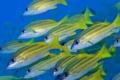 Картинка море, рыбы, океан, косяк