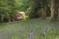 Картинка лес, деревья, цветы, поляна, колокольчики, кусты, рододендроны