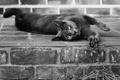 Картинка кошка, кот, животное, шерсть, черно-белое