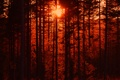 Картинка лес, деревья, закат, силуэт