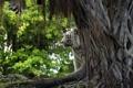 Картинка природа, тигр, дерево