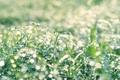 Картинка трава, капли, роса