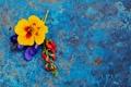 Картинка лето, цветы, синий, фон