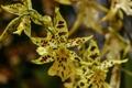 Картинка лепестки, орхидеи, макро, пестрый