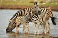 Картинка природа, Намибия, зебры