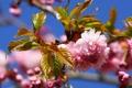 Картинка солнце, цветы, розовый, весна, ветвь