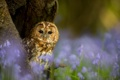 Картинка лес, глаза, макро, дерево, сова, птица, окрас
