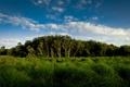 Картинка лес, небо, трава, облака, деревья