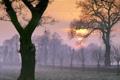 Картинка деревья, рассвет, птица, утро, заморозки
