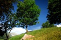Картинка лето, горы, природа, дерево, тропа