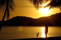 Картинка пляж, солнце, закат, пальмы, берег, остров, чайка