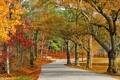 Картинка природа, осень, парк