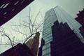 Картинка небо, ветки, город, отражение, дерево, здания, небоскребы