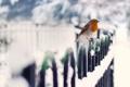 Картинка природа, птица, снег, забор