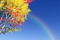 Картинка небо, листва, радуга, дерево