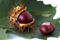 Картинка каштан, плод, осень, лист