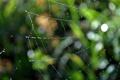 Картинка капли, засада, паутина, паутины, пауки, ловушка, ловушки