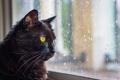 Картинка кот, усы, взгляд, кошак, окно