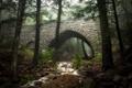 Картинка лес, мост, река
