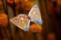 Картинка цветок, бабочьки, True Love