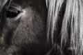Картинка взгляд, глаз, конь, лошадь