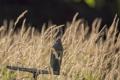 Картинка природа, птица, трава