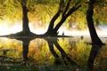 Картинка пруд, отражение, утки, озеро, парк