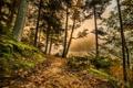 Картинка осень, лес, листья, деревья, туман, озеро, мох