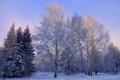Картинка зима, снег, фото, ель, береза, деревья. природа