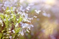Картинка весна, веточки, цветы