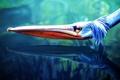 Картинка голова, pelicano, пелекан