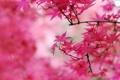 Картинка листья, осень, осенний окрас, деревья