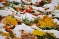 Картинка листья, снег, трава