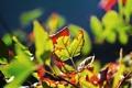 Картинка осень, листья, оранжевые листья, сухие листья