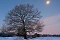Картинка лес, мороз, скамейка, зима, снег, дерево