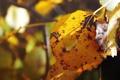 Картинка осень, листья, сердце, сердечко