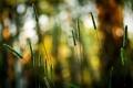Картинка зелень, боке, цвета, размытость, обои, природа, растения