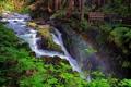 Картинка лес, река, водопад, радуга, Washington, Olympic National Park, Sol Duc Falls