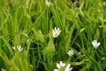 Картинка природа, Цветы, весна