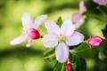 Картинка макро, весна, бутоны, цветение