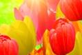 Картинка тюльпаны, текстура, лепестки, цветы