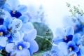 Картинка листья, цветы, ветки, лепестки, цветение, синие, листики